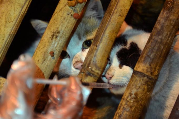 Cats_pixanews.com-3-680x452[1][1]